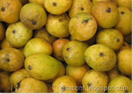 Mancurad mangoes in Goa