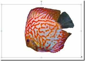 Fish-W03 (320x229)