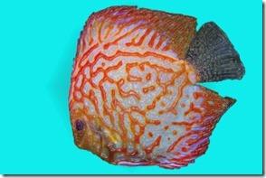 fish-W-05 (320x213)