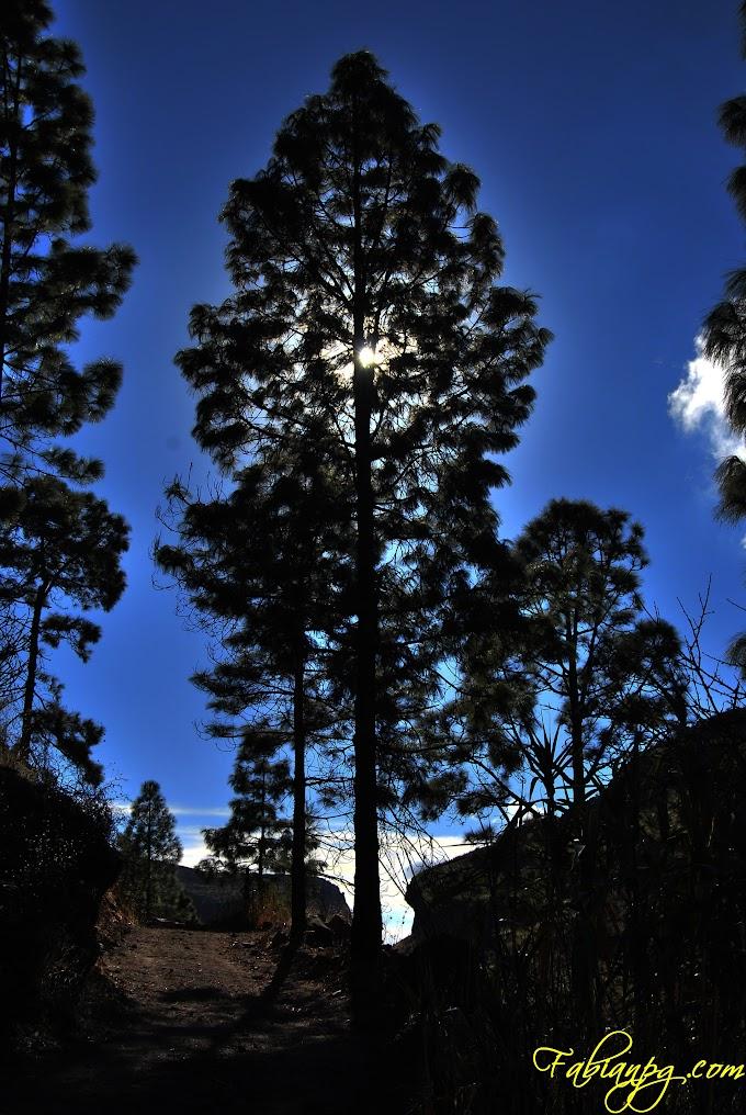 La sombra de un árbol