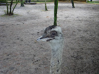 Emu saying hello