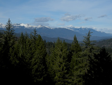 Shasta-Trinity mountains