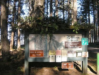 lovely ferns and moss taking over the campground sign