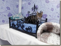 a-luxury-cat-hotel-3