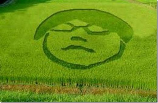 crop-circle-gayus
