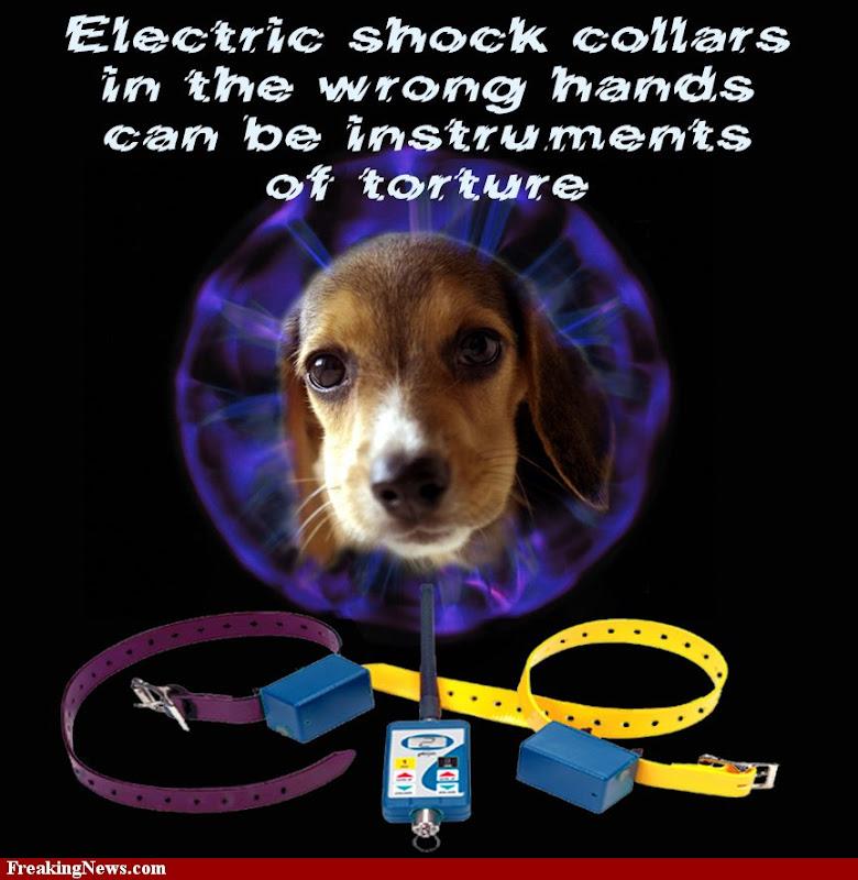 Shock-collar-13950.jpg