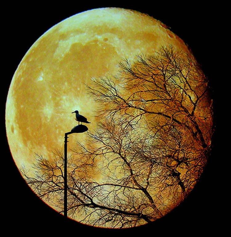 full moon and bird