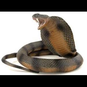 Power Animal Snake Cover