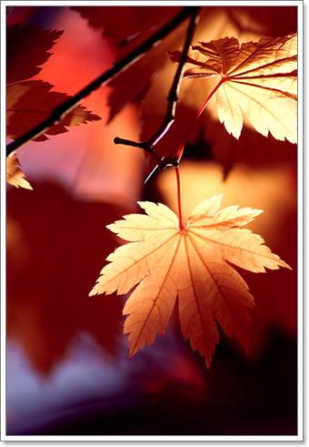 I por qu caen las hojas en oto o taringa for Arboles que no se le caen las hojas en invierno