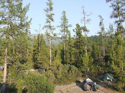 Die Zelte unseres Camps waren in der heideartigen Taiga zwischen den Bäumen verstreut.