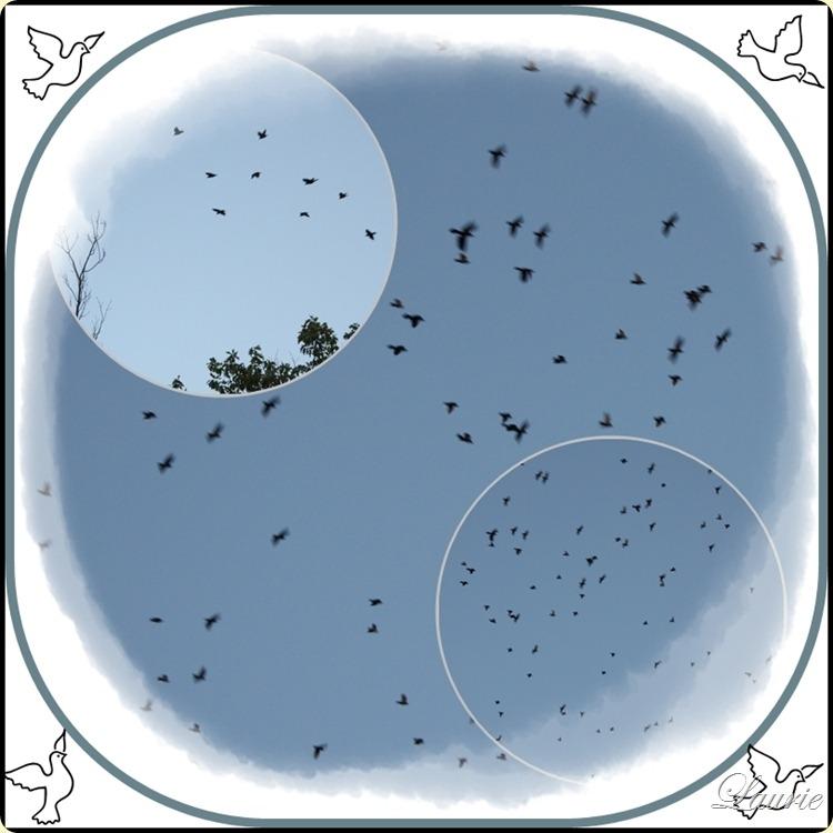 bird mos