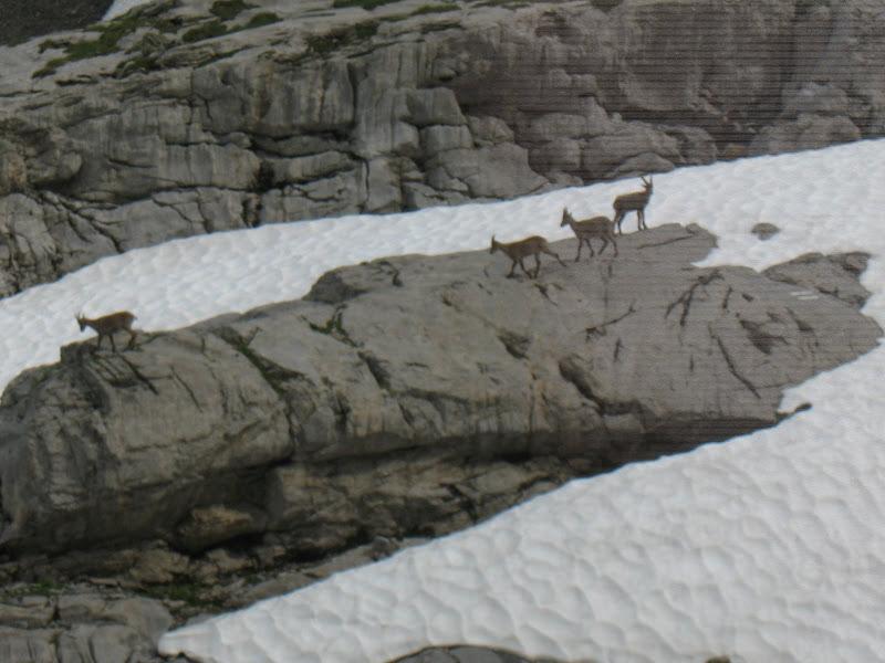 [Alpes 07-2010] quelques photos IMG_4409
