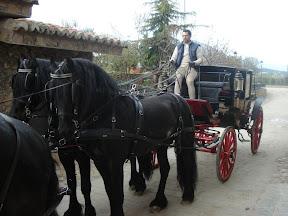 Arden Dexter Classic Wipe Clean BioThane Team Horse  Harness