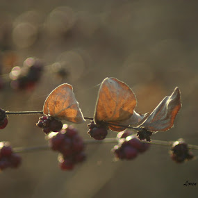 Berries by Loren Bradley - Nature Up Close Leaves & Grasses ( red, clusters, dried, fall, berries )