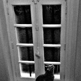 cat window by Dobrin Anca - Buildings & Architecture Other Interior ( home, cat, window, france, morning,  )