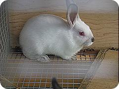 kids&rabbits 022