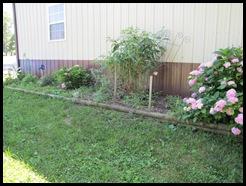 Garden & storm 016