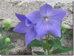 Garden & storm 033