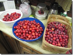 Maters & plums 004