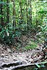 Sentier dans la jungle de Bukit Timah