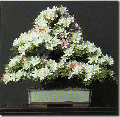 azalea1
