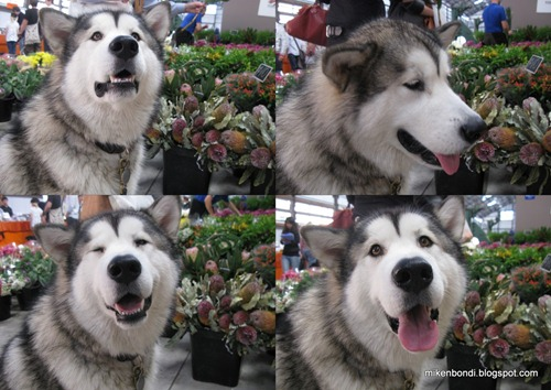 Munson at Carriageworks flower stall