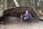 Oczywiście takie fikuśnie wyrwane drzewo nie może się obyć bez zdjęcia :-)