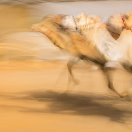 Racing by Walid Ahmad - Animals Other ( camels, nikon, photography )