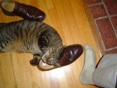 image of bonkers the cat and my shoe