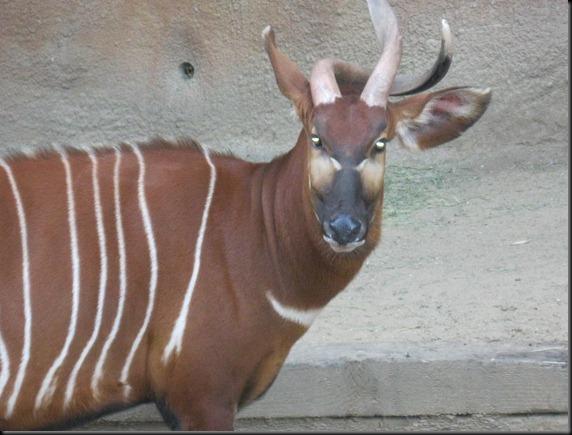 zoo! 058