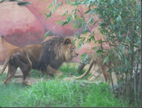 zoo! 063