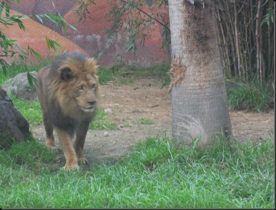 zoo! 064