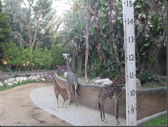 zoo! 077