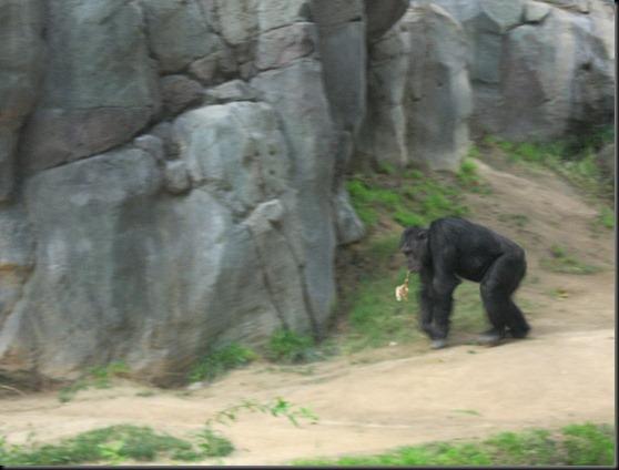 zoo! 080