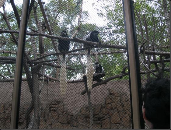 zoo! 090
