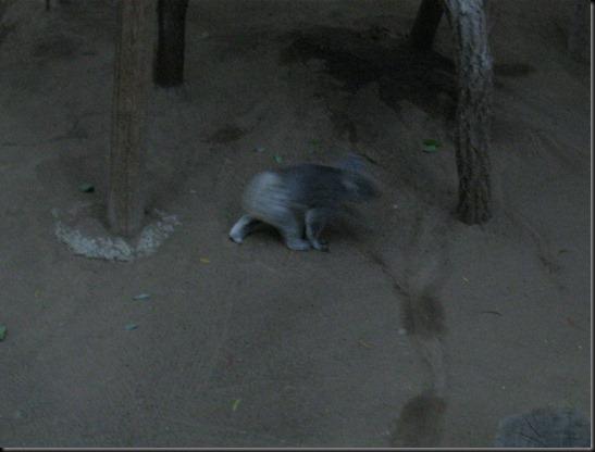 zoo! 112