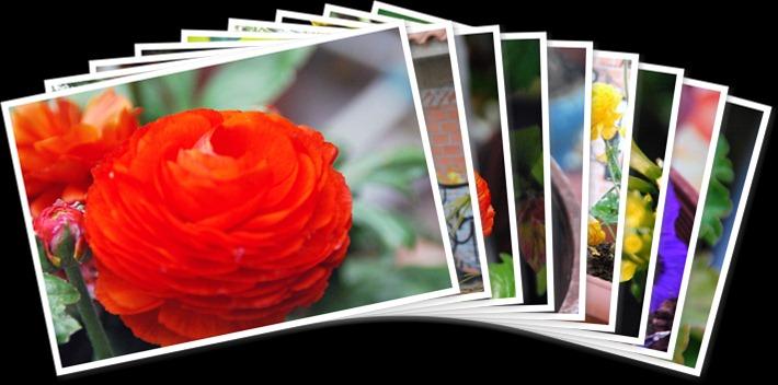 Προβολή του άλμπουμ Πολλα Λουλουδια