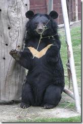 Andrew il primo orso salvato