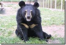 orso-della-luna