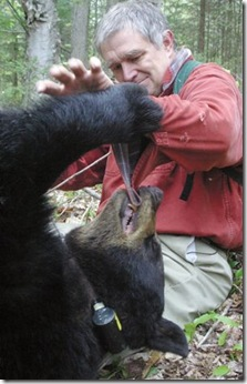 nationalgeographic_a_man_among_bears