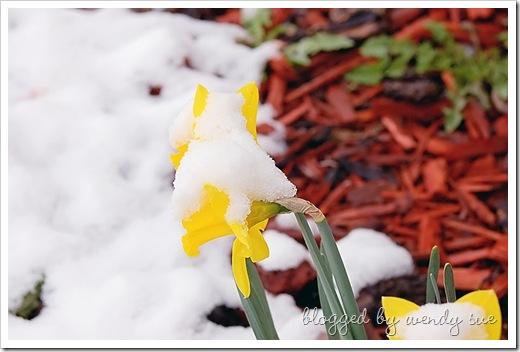 043010_snowandflower_filtered