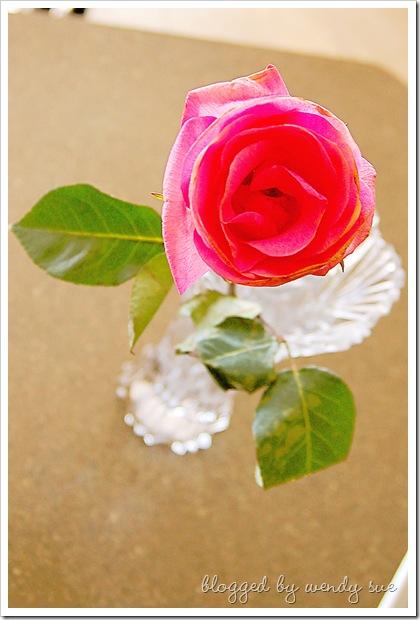 primary_rose