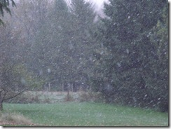 First Snow-October 2010 002