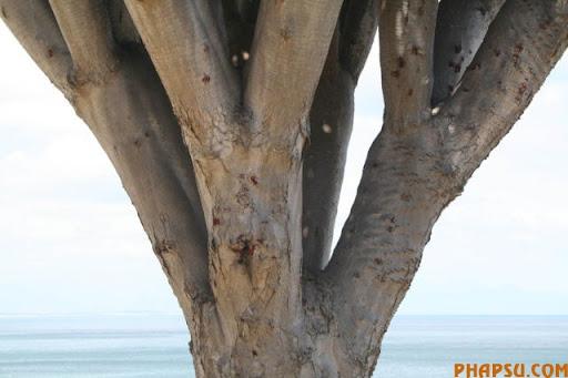 a_tree_that_640_07.jpg