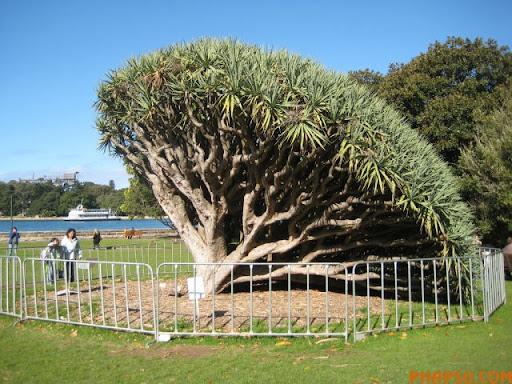 a_tree_that_640_09.jpg