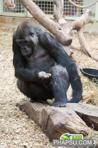 gorilla_wtf_02.jpg