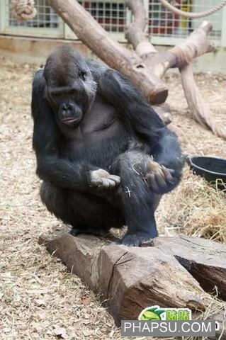 gorilla_wtf_03.jpg