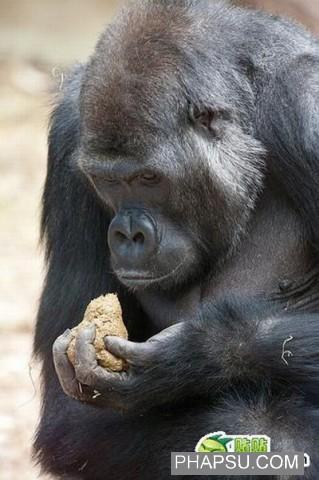 gorilla_wtf_08.jpg