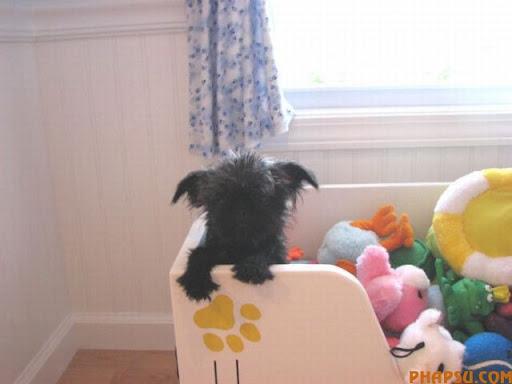 dog_houses_21.jpg