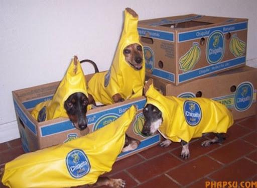 bananadogs.jpg